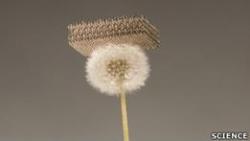 Cоздан самый легкий искусственный материал на свете