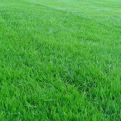 Посадити газон своїми руками.