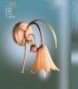 N&B Light Тюльпано 471